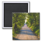 Europe, Italy, Tuscany, tree lined road Magnet