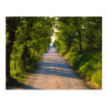 Europe, Italy, Tuscany, tree lined road Postcard