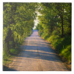 Europe, Italy, Tuscany, tree lined road Tile