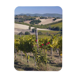 Europe, Italy, Umbria, near Montefalco, Vineyard Magnet