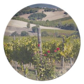 Europe, Italy, Umbria, near Montefalco, Vineyard Plate