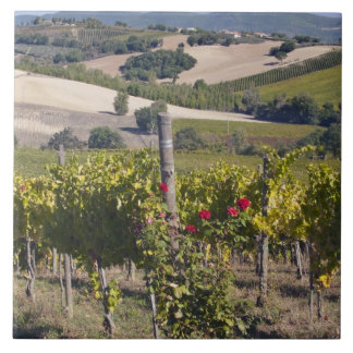 Europe, Italy, Umbria, near Montefalco, Vineyard Tile