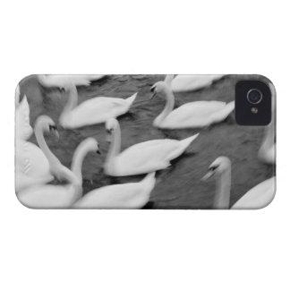Europe, Lucerne, Switzerland. Swans on the Reuss iPhone 4 Case