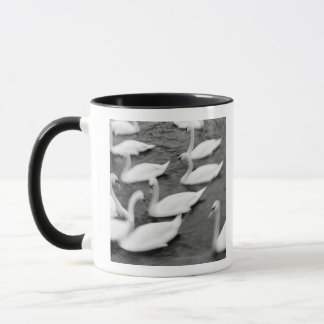 Europe, Lucerne, Switzerland. Swans on the Reuss Mug