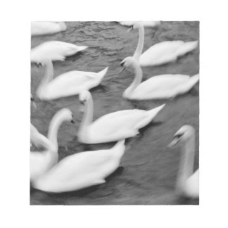 Europe, Lucerne, Switzerland. Swans on the Reuss Notepad