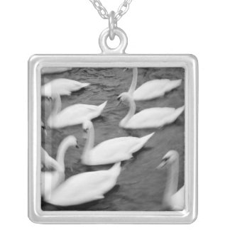 Europe, Lucerne, Switzerland. Swans on the Reuss Silver Plated Necklace
