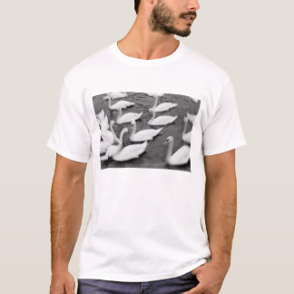 Europe, Lucerne, Switzerland. Swans on the Reuss T-Shirt