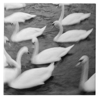 Europe, Lucerne, Switzerland. Swans on the Reuss Tile