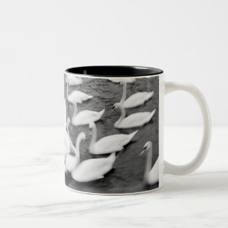 Europe, Lucerne, Switzerland. Swans on the Reuss Two-Tone Coffee Mug