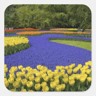 Europe, Netherlands, Holland, Lisse, Keukenhof Square Sticker