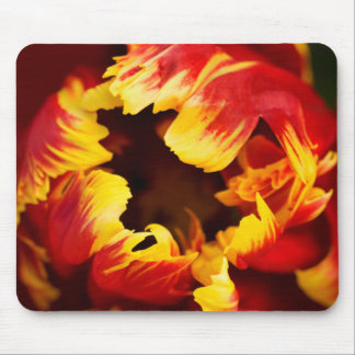 Europe, Netherlands, Lisse. Parrot tulip Mouse Mat