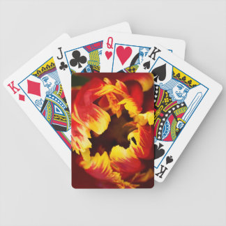 Europe, Netherlands, Lisse. Parrot tulip Poker Deck