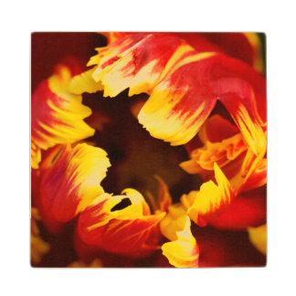 Europe, Netherlands, Lisse. Parrot tulip Wood Coaster