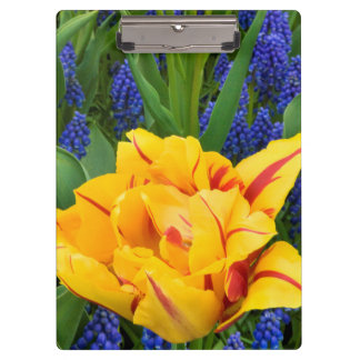 Europe, Netherlands, Lisse. Tulips Clipboard