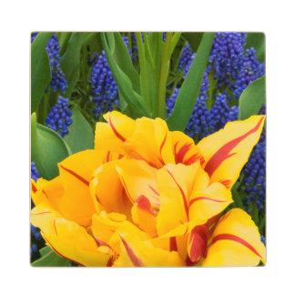 Europe, Netherlands, Lisse. Tulips Maple Wood Coaster