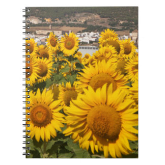 Europe, Spain, Andalusia, Cadiz Province Notebook
