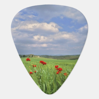 Europe, Tuscany, Poggiolo. Red poppies sway Guitar Pick