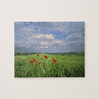 Europe, Tuscany, Poggiolo. Red poppies sway Jigsaw Puzzle