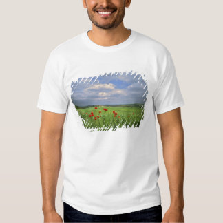 Europe, Tuscany, Poggiolo. Red poppies sway T-shirts