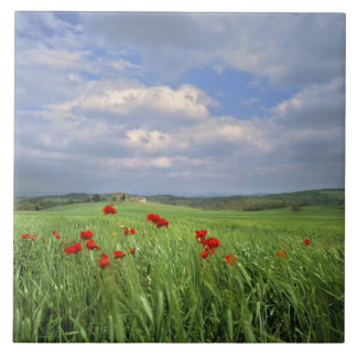 Europe, Tuscany, Poggiolo. Red poppies sway Tile