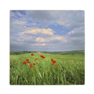 Europe, Tuscany, Poggiolo. Red poppies sway Wood Coaster