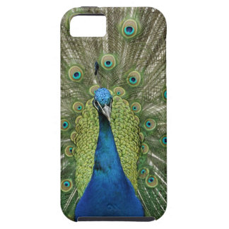 Europe, Wales, Cardiff. Cardiff Castle, peacock iPhone 5 Covers