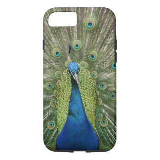 Europe, Wales, Cardiff. Cardiff Castle, peacock iPhone 8/7 Case