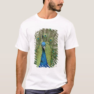 Europe, Wales, Cardiff. Cardiff Castle, peacock T-Shirt