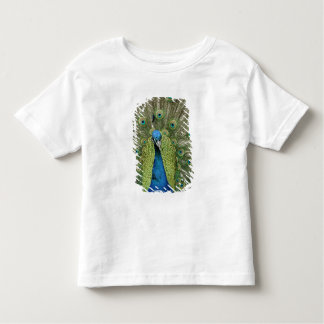Europe, Wales, Cardiff. Cardiff Castle, peacock Toddler T-Shirt