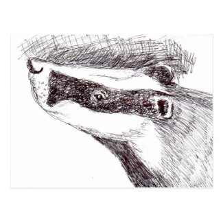 European Badger (a455) Postcard title=