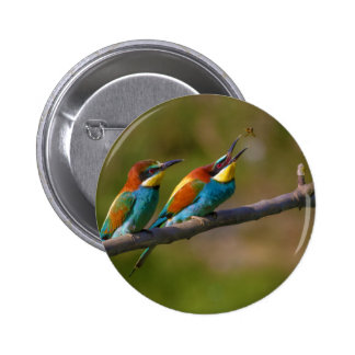 European Bee Eater Birds in Ariège France 6 Cm Round Badge