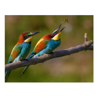 European Bee Eater Birds in Ariège France Postcard