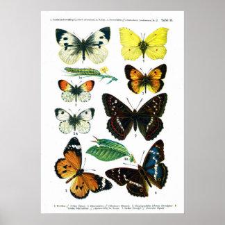 European Butterflies (Plate 02) Print