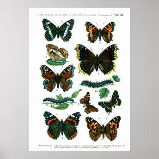 European Butterflies (Plate 03) Print