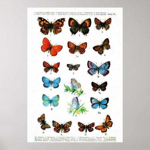 European Butterflies (Plate 06) Print