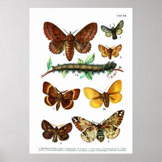 European Butterflies (Plate 12) Posters