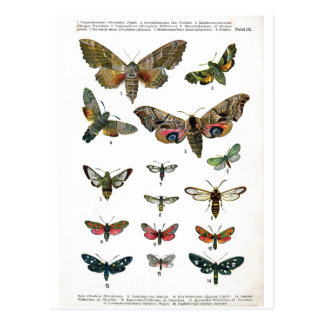 European Butterflies Postcard