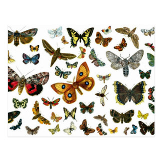 European Butterfly Collage Postcard