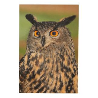 European eagle owl wood print