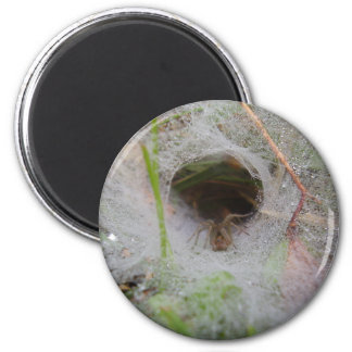 European Funnel Web Spider Magnet