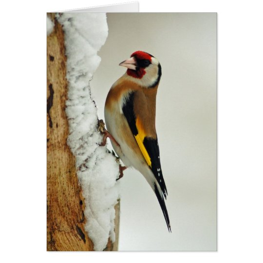 European Goldfinch in snow greeting card
