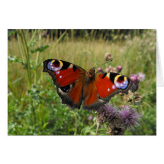 European Peacock Butterfly Greeting Card