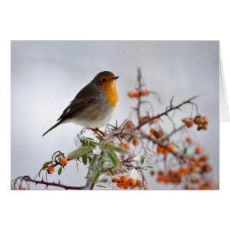 European Robin and orange berry Card