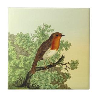 European Robin Small Square Tile