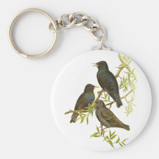 European Starling Basic Round Button Key Ring