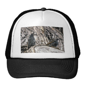European Starling Cap