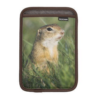 European Suslik, Spermophilus citellus, adult, iPad Mini Sleeve