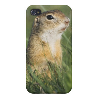 European Suslik, Spermophilus citellus, adult, iPhone 4 Case