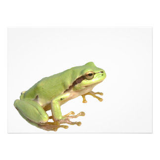 European Tree Frog Custom Invites