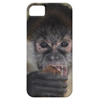 Eve Monkey Island iPhone 5 Case